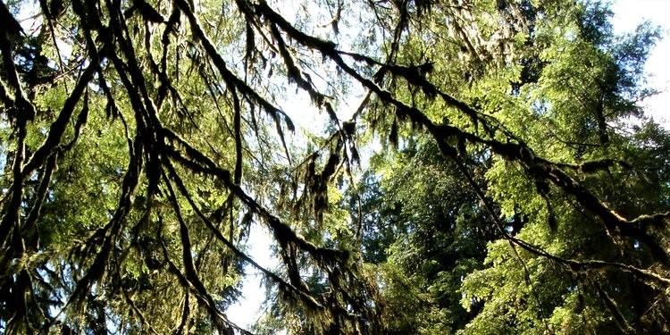 Bitkiler Işığı Nasıl Algılıyor?