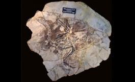 Neden Fosilleşmiş Kıllar Çok Ender Bulunuyor?