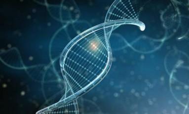 Gen Ölçeğinde Evrim: Genler Kaynaşarak, Yeni Genler Yapabiliyor