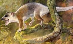 Ankara Yakınlarında Keseli Hayvan Fosili Bulundu