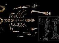 Neandertal ve Modern İnsan, Çocukluktaki Gelişim Modelinde Ortaklaşıyor