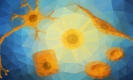 Kök Hücrelere Genel Bir Bakış