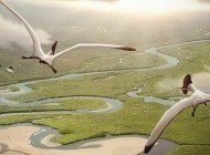 Uçan Sürüngen: Pterozor