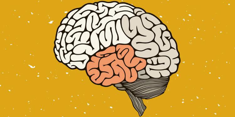 Uzun Süreli Hafızayı Güçlendiren Yeni Bir Bileşik Tanımlandı
