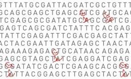 Canlı Hücrede DNA Baz Çifti Değiştirebilen Moleküler Makine Geliştirildi