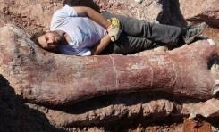Fosillerde Yumuşak Doku Bulmak Olanaklı Görünmüyor