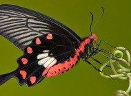 Kelebek Kanadı Mimarisi Uygulanan Güneş Pillerinin Verimi Yükseldi