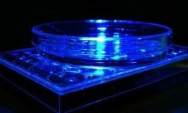 Işık, Gen Fonksiyonlarını Kontrol Etmek İçin Kullanılabilir