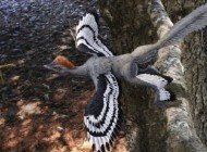 Kuşların Uçmasının Evrimsel Kökeni