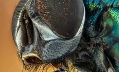 Partenogenez Mekanizmasının Anlaşılması, Böceklerde Nüfus Kontrolü Sağlayabilir