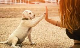 Bazı İnsanlar Köpekleri İnsanlardan Daha Çok Seviyor