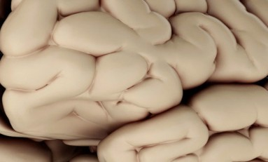 Beynimizin Orantısızlığı ve Evrimimiz