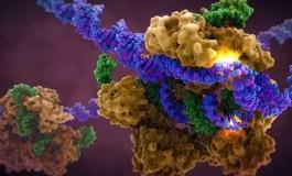 CRISPR-Cas9'un DNA'yı Nasıl Düzenlediği Gerçek Zamanlı Olarak İlk Kez Görüntülendi