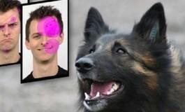 Mutlu İnsan Yüzleri Köpekler İçin Daha Çekici
