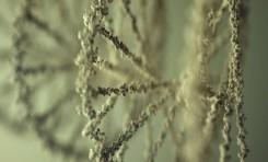 Yeni Yarı-Sentetik Organizma Doğada Hiç Görmediğimiz Moleküller Yapabiliyor