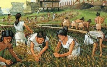 Neolitik Dönem Kadın Çiftçilerin Kolları, Modern Kürekçi Kadınlarınkinden Daha Güçlüydü
