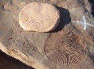 Ediakara Dönemi Araştırmalarına İz Fosilleri Işık Tutuyor