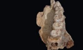 Afrika Dışındaki En Eski İnsan Fosili Keşfedildi