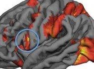 Ahlaki İkilemlerdeki Kararlarımızı Ayna Nöron Aktivitesi Belirliyor Olabilir