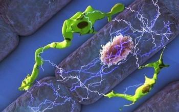 Bağışıklık Hücrelerinin, Kalp Atışında Şaşırtıcı Bir Rol Oynadığı Keşfedildi
