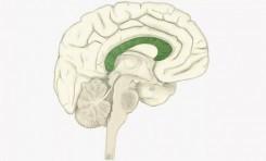 Aşırı Kaygı, Alzheimer Hastalığının Habercisi Olabilir