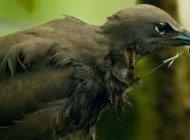 İlginç İlişkiler Doğası: Yapışkan Tohumlarıyla Kuşların Ölümüne Sebep Olan Ağaç