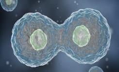 DNA Replikasyon Ritmine Müdahale Ederek Kanser Hücreleri Öldürülebilir
