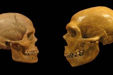 DNA'nın Atalarımız Hakkında Ortaya Koyduğu 5 Şaşırtıcı Özellik