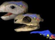 Kaplumbağa Beyninin Evrimine Işık Tutmak
