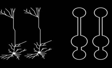 Nöronlar, Yapay Zekâ Araştırmaları İçin Doğru Şekli Sunuyor