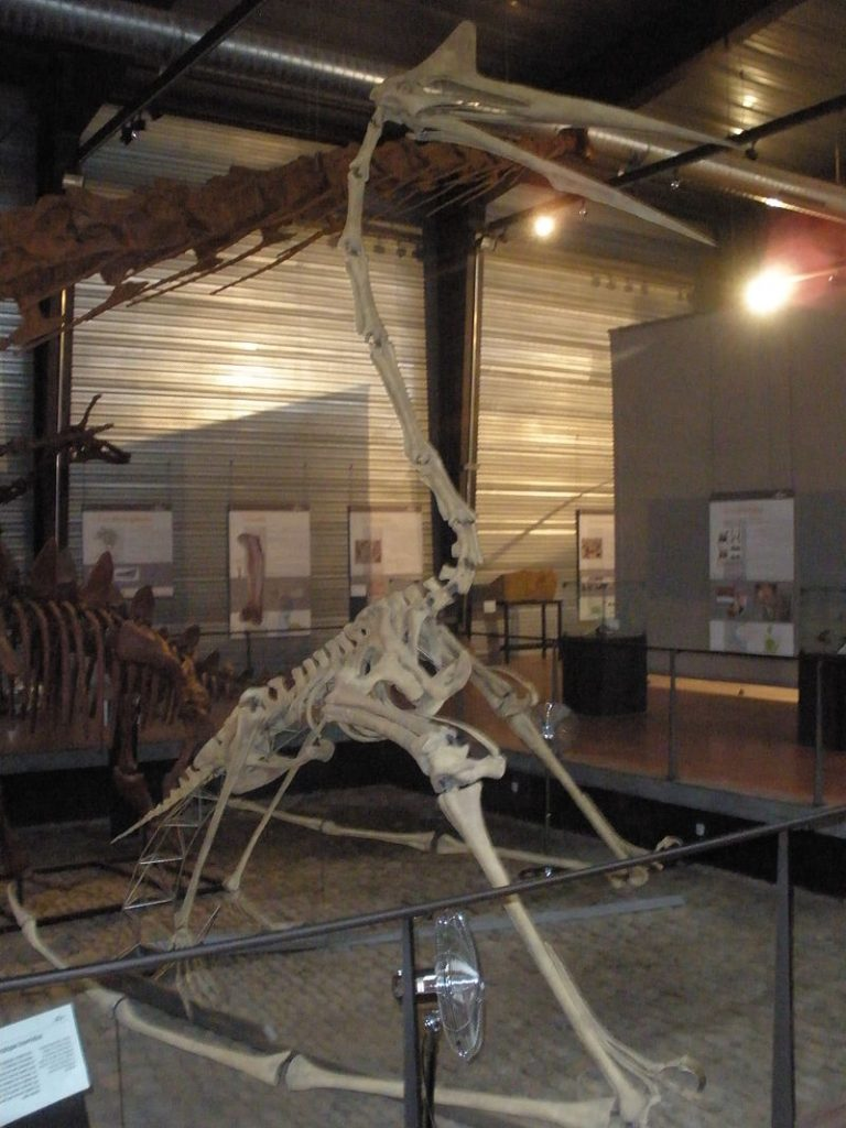 [Resim: tarih-oncesinde-yasamis-23-ilginc-hayvan...8x1024.jpg]